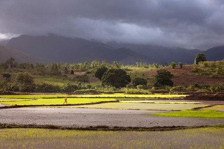 fort dauphin: A man runs across a paddy field,with stormy skies beyond,near Fort Dauphin,Madagascar