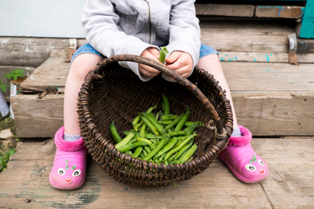 Young boy shelling sugar snap peas, low section LANG_EVOIMAGES