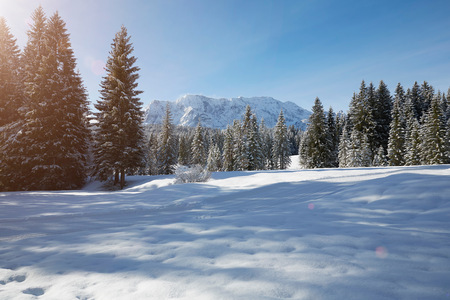Fir trees on snow covered landscape, Elmau, Bavaria, Germany
