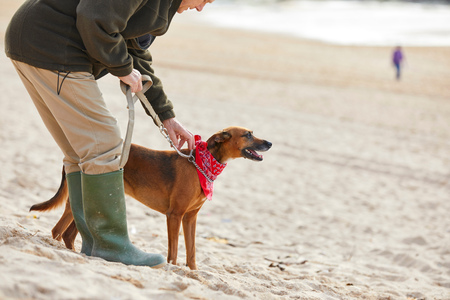 companions: Man and dog on beach, Constantine Bay, Cornwall, UK