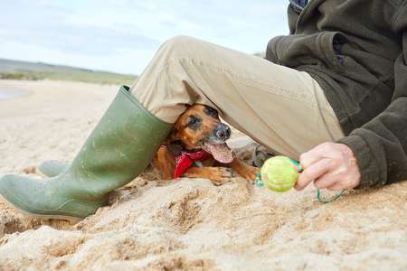 Man and pet dog sitting on beach, Constantine Bay, Cornwall, UK LANG_EVOIMAGES