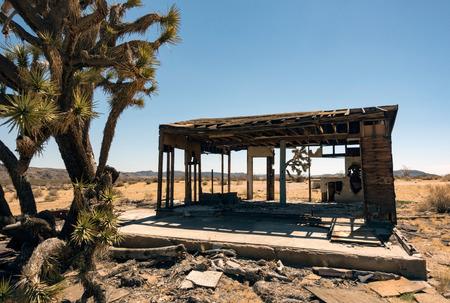 Joshua tree by dilapidated shack, Joshua Tree national park, California, USA