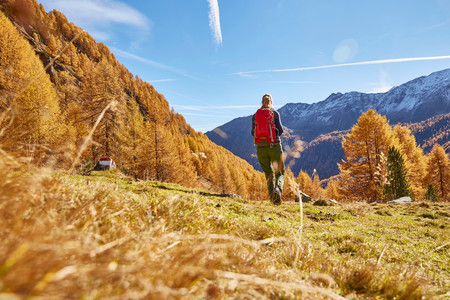 one mature woman only: Woman hiking, rear view, Schnalstal, South Tyrol, Italy