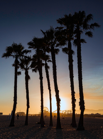 santa monica: Silhouette of palm trees, Santa Monica, California, USA
