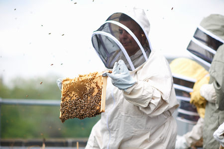 age 25 30 years: Beekeeper holding hive frame LANG_EVOIMAGES