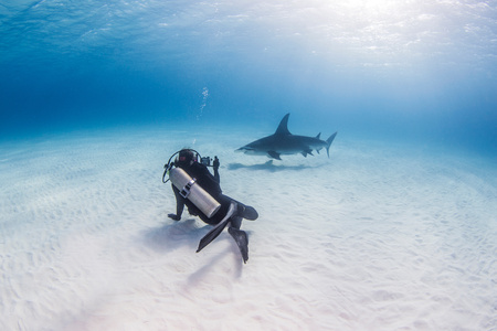 pez martillo: Diver swimming with Great Hammerhead shark, underwater view