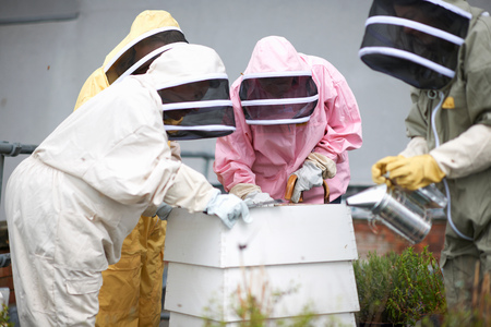 age 25 30 years: Beekeepers inspecting hive