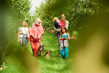 Family walking dog in apple orchard
