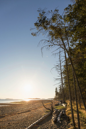 Beach and forest at sunrise, Rathrevor Beach Provincial Park, Vancouver Island, British Columbia, Canada LANG_EVOIMAGES