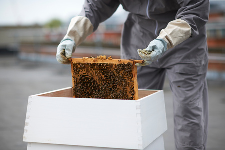 Beekeeper removing hive frame from hive, mid section