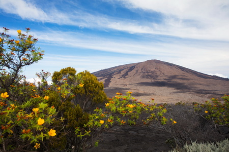 desolacion: Volcanic landscape with yellow shrub flowers and Piton de la Fournaise, Reunion Island