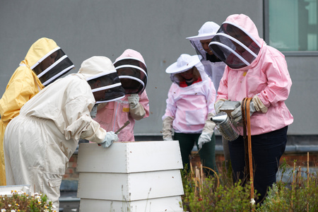 age 25 30 years: Group of beekeepers inspecting hive