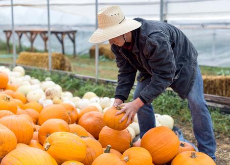 Young man stacking pumpkins, Missoula, Montana, USA LANG_EVOIMAGES