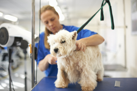 Woman grooming dog in pet salon LANG_EVOIMAGES