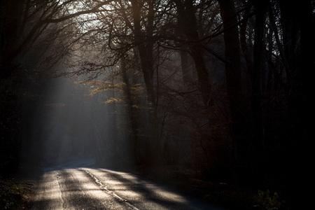 Sunlight on tree lined road, Birdlip, UK LANG_EVOIMAGES