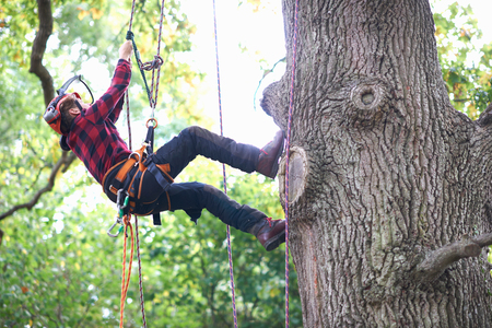 Trainee teenage male tree surgeon climbing up tree trunk LANG_EVOIMAGES