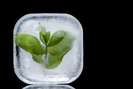 Frozen Mint LANG_EVOIMAGES