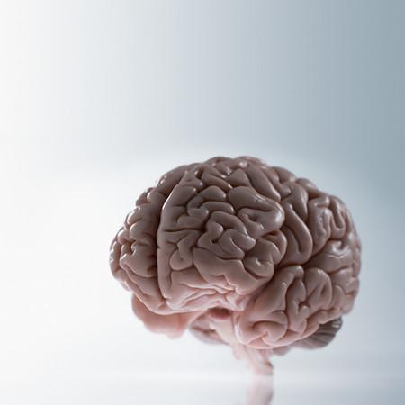 A Brain LANG_EVOIMAGES