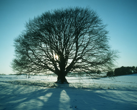 Tree And Snow Covered Ground