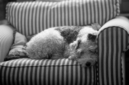 A Dog Lying On A Arm Chair