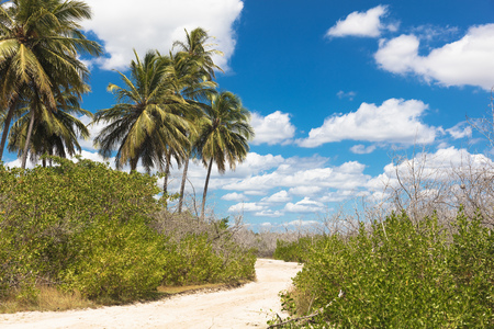 Sand pathway through foliage and palm trees, Jericoacoara national park, Ceara, Brazil, South America