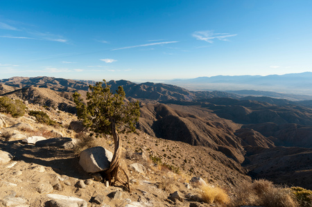 Dwarf Tree, Keys View, Joshua Tree National Park, California, USA LANG_EVOIMAGES