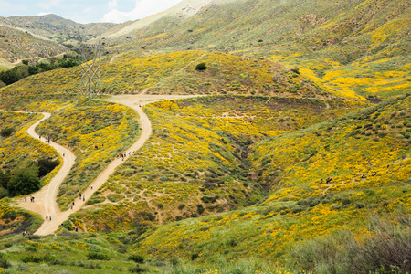 Distant landscape view of tourists looking at californian poppies (Eschscholzia californica), North Elsinore, California, USA
