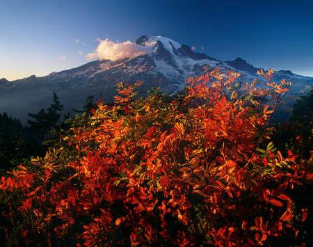 Mountain ash, Mt. Rainier National Park, Washington