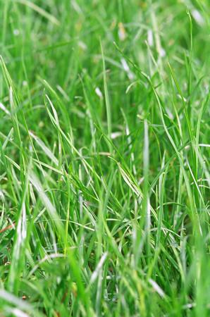 Grass LANG_EVOIMAGES