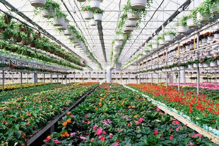 Industrial greenhouse LANG_EVOIMAGES