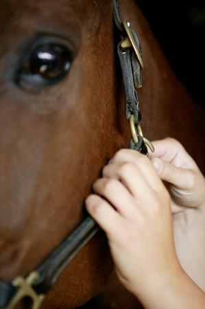Person adjusting horses bridle