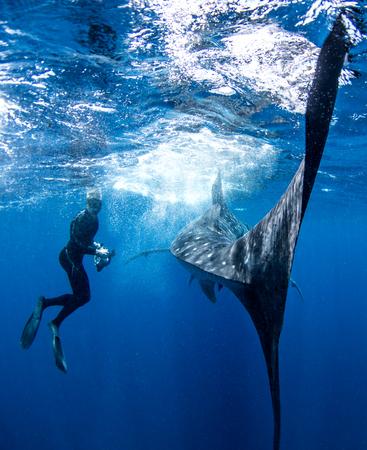 Diver alongside whale shark