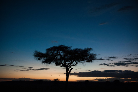 An acacia at sunset, Tsavo, Kenya, Africa LANG_EVOIMAGES