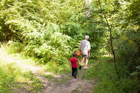 Grandfather and grandson mushroom hunting in forest, Prievidza, Banska Bystrica, Slovak Republic LANG_EVOIMAGES