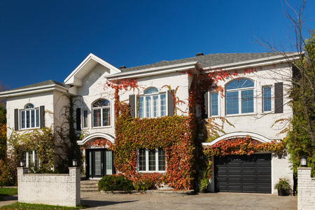 Luxurious white brick house facade covered with climbing Vitis vines LANG_EVOIMAGES