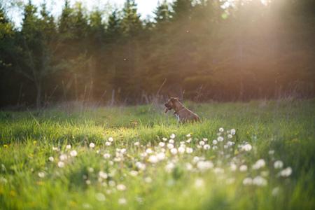 Dog sitting in green grassy field