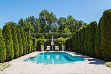 Outdoor swimming pool with parasol and lounge chairs,bordered by rows of cedar trees,in luxury residential backyard