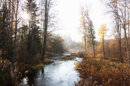 Landscape of woodland river and mist in autumn sunlight, Lohja, Southern Finland, Finland LANG_EVOIMAGES