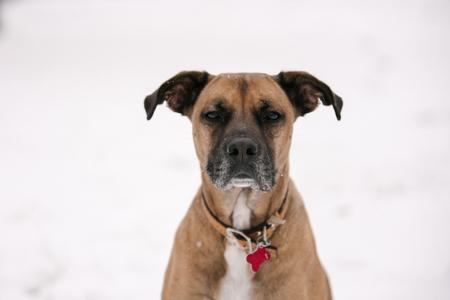 Portrait of pet dog in snow