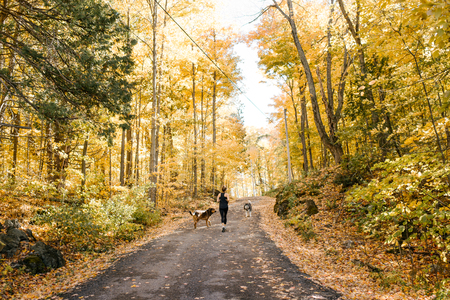 Woman jogging with dogs in forest