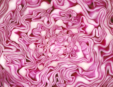 cabbages: Macro red cabbage detail Stock Photo