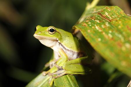 tweet: Frog tweet
