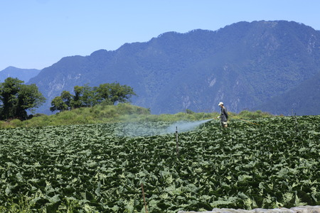 pesticides: Cabbage Spray pesticides,Fushoushan