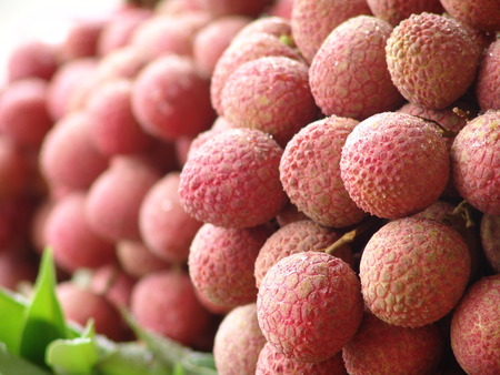 litchi in the field,lychee,sapindaceae