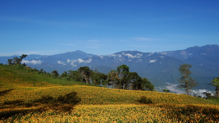 tourist attractions: Orange Daylily, Famous tourist attractions in Taiwan