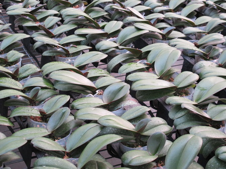 Tissue cultivation