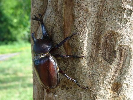beetle lose up photo