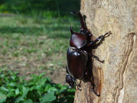 beetle close up photo