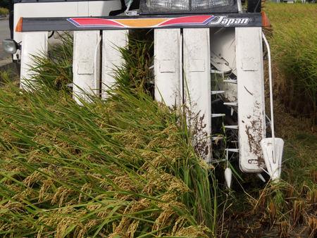 combine harvester: La recolecci�n de Cosechadoras