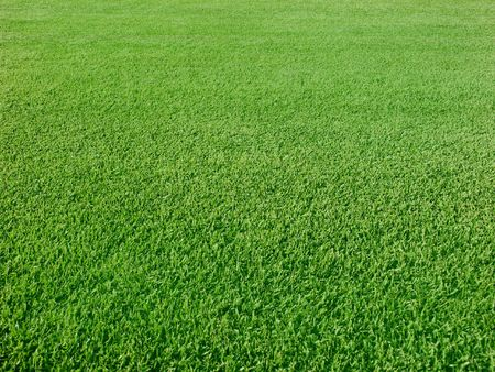 Green grass with sunlight for background
